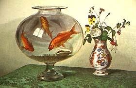 Private aquarien homepage hans beckmann oberndorf for Kleine goldfischarten